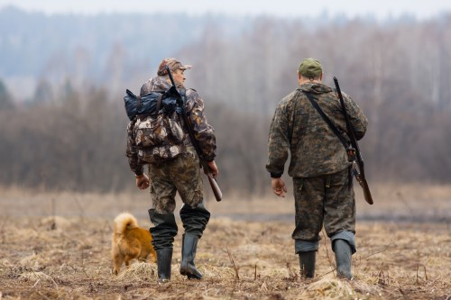 How to Choose Between Tree Stands or Ground Blinds When Hunting