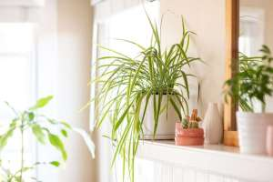 Photo: Indoor Plants for Clean Air