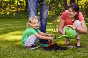 Photo: Taking proper care of your newly planted trees