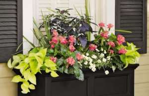 Photo: Add Colorful Container Gardens