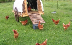 Photo: How to Get Started Raising Your Backyard Chickens