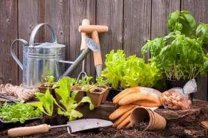Photo: Plant a Garden