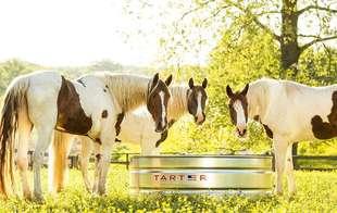 Horse Care & Tack