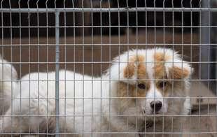Dog Kennels