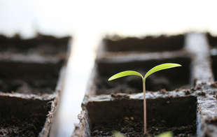 Seed Starter Pots & Trays