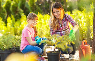 Get trees and shrubs for your yard, including fruit trees, from Sutherlands.