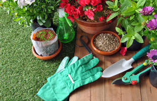 Get flower and vegetable seeds for your garden from Sutherlands.