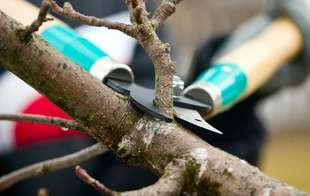 Keep your trees and shrubs trimmed with Sutherlands selection of loppers and pruners.