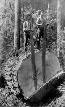 redwood being cut by two lumberjacks