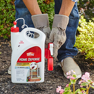 Protect your garden with insect and pest control