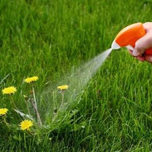 Kill weeds before they get out of hand