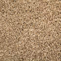 1 x 12-Foot Alliance Plush Carpet, Neutrality, Per Square Foot
