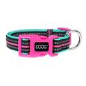 High Visibility Neon Rin Tin Tin Dog Collar, Large