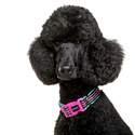 Dog Owners Outdoor Gear DOOG3669