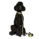 Dog Owners Outdoor Gear DOOG3446
