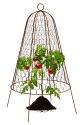 20 x 14-Inch Plant Protector