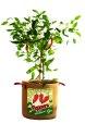 10-Gallon Peppers Burlap Grow Bag