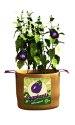 15-Gallon Eggplant Burlap Grow Bag