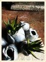 Succulent #15