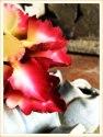 Succulent #6