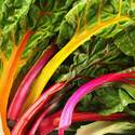 Swiss Chard Mixed Colors Seed