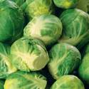 Brussels Sprouts Long Island Improved Seed