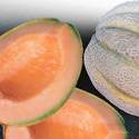 Cantaloupe Delicious Heirloom Seed