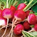 Radish Sparkler Seed