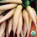 Organic Radish Icicle Short Top Seed