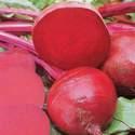 Beet Ruby Queen Heirloom Seed
