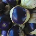 Tomatillo Purple Seed