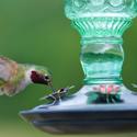 Alternate Image for Perky Pet 8108-2 Antique Bottle Glass Hummingbird Feeder