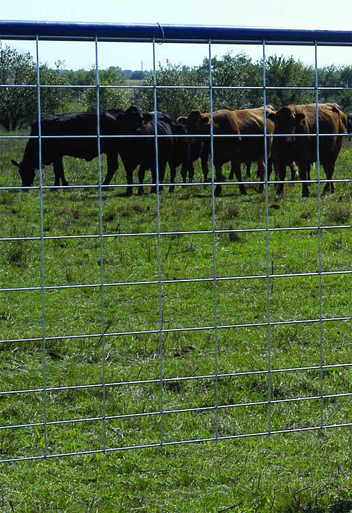 Oklahoma Steel & Wire 0059-7 Max50 Cattle Panel 50-10Wire 4Ga at ...