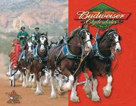 Nostalgic Images BD-1281 Budweiser Clydesdale Metal Sign