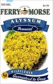Ferry-Morse Seed Company 1008 Alyssum Gold Dust Seeds