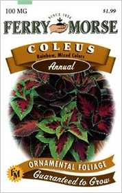 Ferry-Morse Seed Company 1034 Coleus Rainbow Mix Seeds