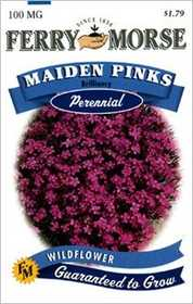 Ferry-Morse Seed Company 1077 Maiden Pinks Seeds