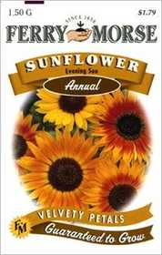 Ferry-Morse Seed Company 1501 Sunflower Evening S Seeds