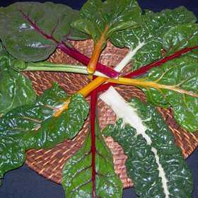 PLANTATION PRODUCTS, INC 41700 Mixed Colors Swiss Chard