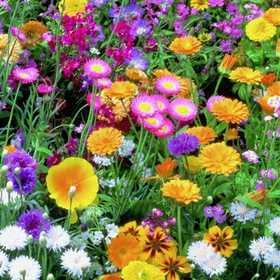 PLANTATION PRODUCTS, INC 41723 Wildflower Meadow Mix For Tubs