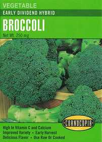 Cornucopia Garden Seeds 242 Early Dividend Hybrid Broccoli Seeds