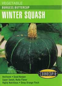 Cornucopia Garden Seeds 296 Burgess Buttercup Winter Squash