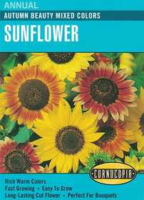 Cornucopia Garden Seeds 133 Autumn Beauty Mixed Colors Sunflower Seeds