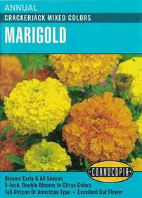 Cornucopia Garden Seeds 120 Crackerjack Mixed Colors Marigold Seeds
