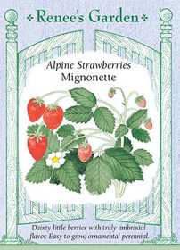 Renee's Garden Seed Co. 5036 Mignonette Alphine Strawberry Seeds