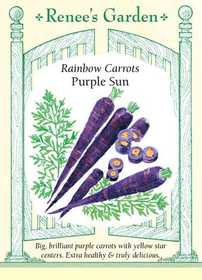 Renee's Garden Seed Co. 5957 Purple Sun Rainbow Carrot Seeds