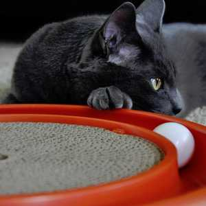 BERGAN, LLC 70128 Turbo Scratcher Cat Toy
