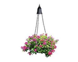 Coleman Cable 92323 Black Solar LED Hanging Planter Light