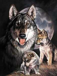 Nostalgic Images OD-914 Wolf Experience Metal Sign