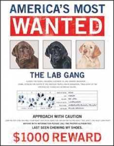 Nostalgic Images OD-1182 The Lab Gang Metal Sign